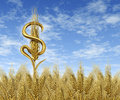 Cash Crop Royalty Free Stock Images