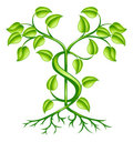 Cash money plant growth concept Stock Image