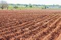 Cassava plantation field and blue sky Royalty Free Stock Photography