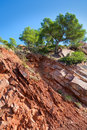 Castellon desierto de las palmas desert red mountains with pines at spain Royalty Free Stock Photography