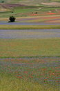 Castelluccio di Norcia / fields Stock Photography