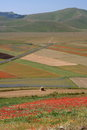 Castelluccio di Norcia / Poppies & coloured fields Royalty Free Stock Image