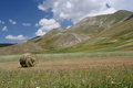 Castelluccio di Norcia / view Stock Photography