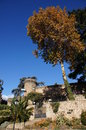 Castillo condes oropesa torres y arbol castle of the counts towers and tree with leaves of autumn in jarandilla de la vera Stock Photo