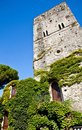 Castle covered by ivy Royalty Free Stock Photography