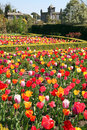 Castle garden Arundel tulips Royalty Free Stock Photos