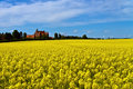 Castle surrounded by canola fields Royalty Free Stock Photo