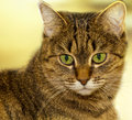 Cat adorable portrait close up Stock Photos