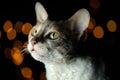 Cat against dark glowing background linda Imagenes de archivo