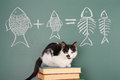 Cat arithmetic joke about a studying Stock Image