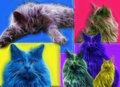 Cat art pop inspired painting Stock Images