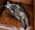 Cat asleep on her back Royalty Free Stock Photo