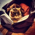 Cat asleep in a holdall Stock Photos