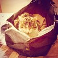 Cat asleep in a holdall Stock Photo