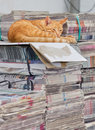 Cat asleep at work Royalty Free Stock Photography