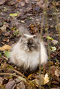 Cat in Autumn Leaves Royalty Free Stock Photography