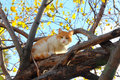 Cat on autumn tree Stock Images
