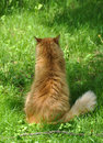 Cat back red sitting on the grass Stock Photos
