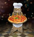 Cat baker holds holiday pizza Royalty Free Stock Photo