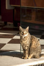 Cat at bakery shop door the glass of and pastry Royalty Free Stock Photography