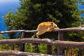 Cat balancing on a wooden fence, island of Crete Royalty Free Stock Photo