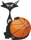 A cat with a ball for basketball Stock Photos