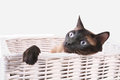 Cat in a basket. Stock Images