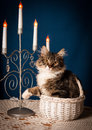 Cat in the basket with candles on blue background Royalty Free Stock Photography