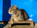Cat basking in the sun blue background Stock Image