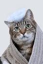 Cat bath Royalty Free Stock Photo