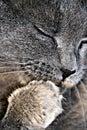 Cat bathing Stock Photo