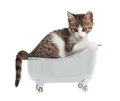 Cat in the bathtub puppy on white background Stock Images