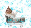 Cat in the bathtub puppy on white background Royalty Free Stock Photos
