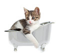 Cat in the bathtub puppy on white background Stock Image