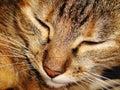 Cat a beautiful called mimi Stock Photo