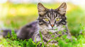 Cat beautiful in city s green summer garden Stock Photos
