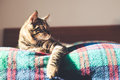 Cat on the bed at home Royalty Free Stock Images