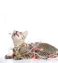A cat bind wire lights for christmas on over white background Royalty Free Stock Photos