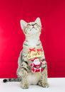 A cat bind wire santa claus for christmas on red background Stock Photos