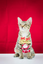 A cat bind wire santa claus for christmas on red background Royalty Free Stock Photography