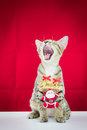 A cat bind wire santa claus for christmas on red background Stock Image