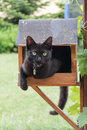 Cat in a bird feeder Royalty Free Stock Photo