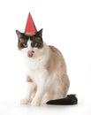 Cat birthday Royalty Free Stock Photo
