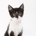 Cat in black and white little young with color Stock Photography