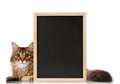 Cat with blackboard pretty young a over white background Stock Photo