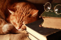 Cat and books ordinary domestic ginger asleep near old on canvas background Stock Images