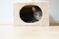 Cat in box shaped hideaway gray tabby resting bed Stock Photography