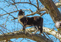 Cat on a branch of tree