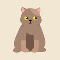 Cat breed british shorthair cute pet portrait fluffy young adorable cartoon animal and pretty fun brown feline mammal