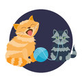 Cat breed cute kitten pet portrait fluffy young adorable cartoon animal and pretty fun play feline sitting mammal